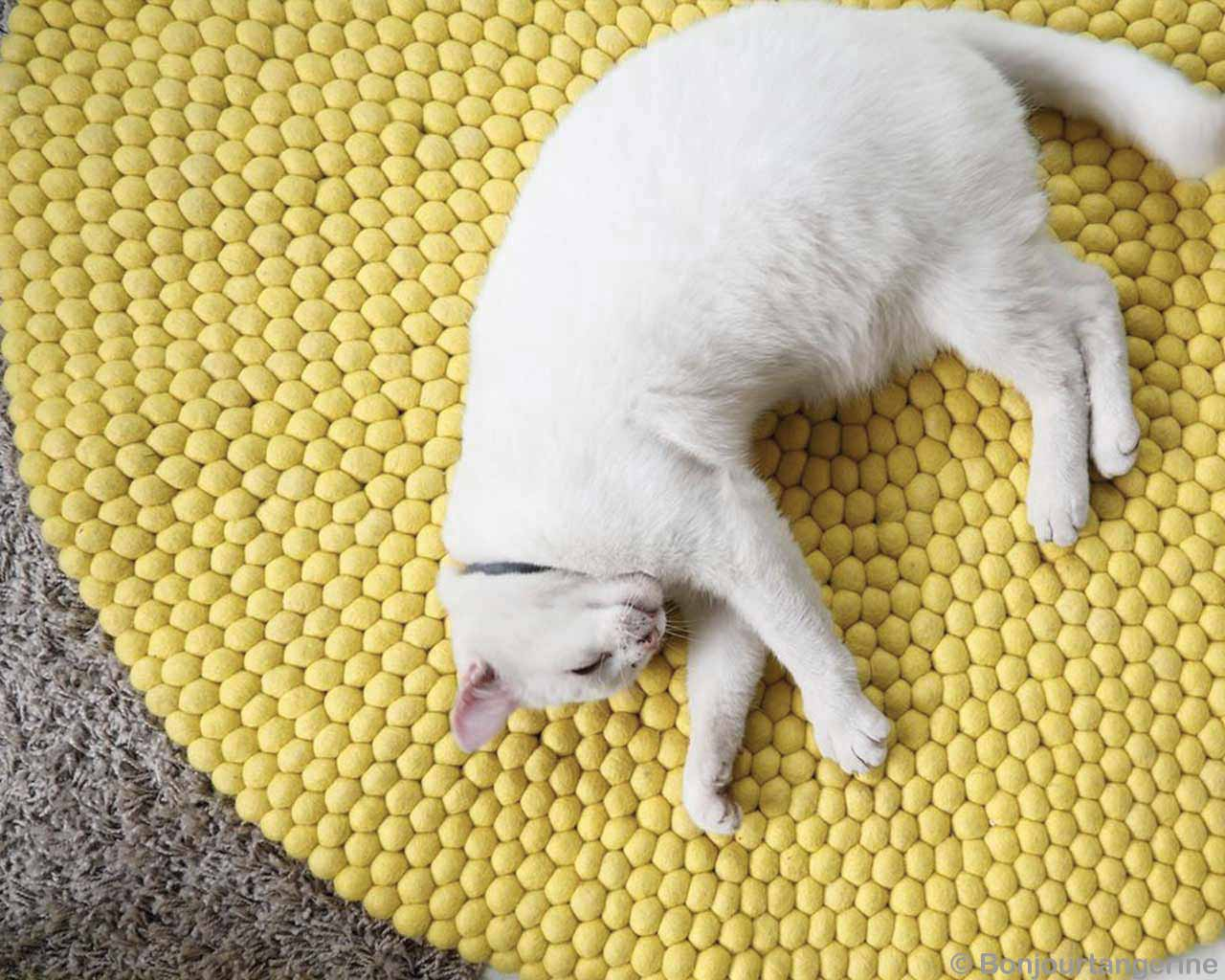 Yellow Carpet White Cat 2